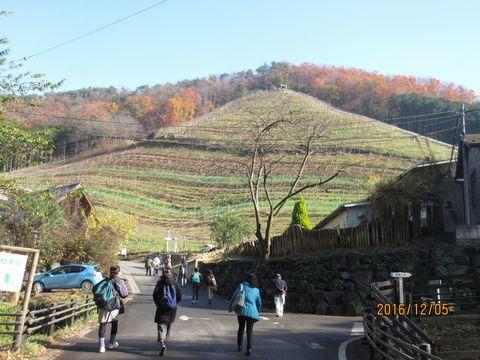 急斜面のブドウ畑